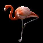 flamingo05