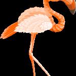 flamingo14